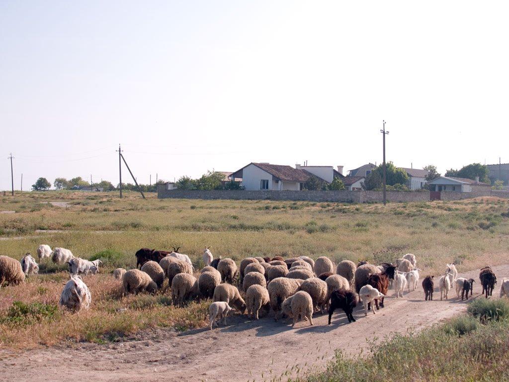 В Крыму в Каменском Ленинского района обыскивают дома крымских татар