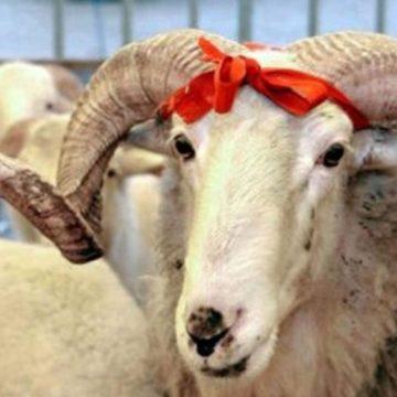 В Джанкойском районе Крыма местные власти не согласовали проведение  праздника «Курбан байрам»